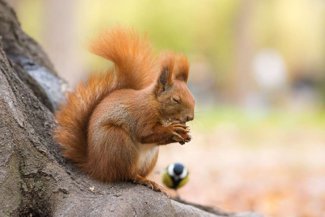brown squirrel on brown tree trunk during daytime online puzzle