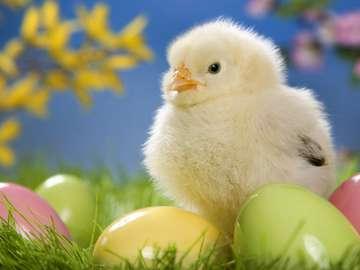 Œufs poussins fleurs de Pâques