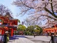 Japonia na wiosnę