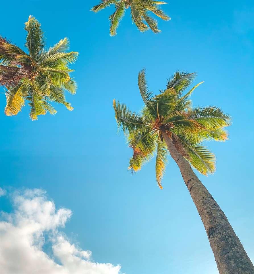 Palmera verde debajo del cielo azul durante el día