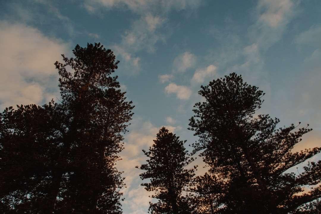 Grüne Bäume unter blauem Himmel tagsüber Online-Puzzle