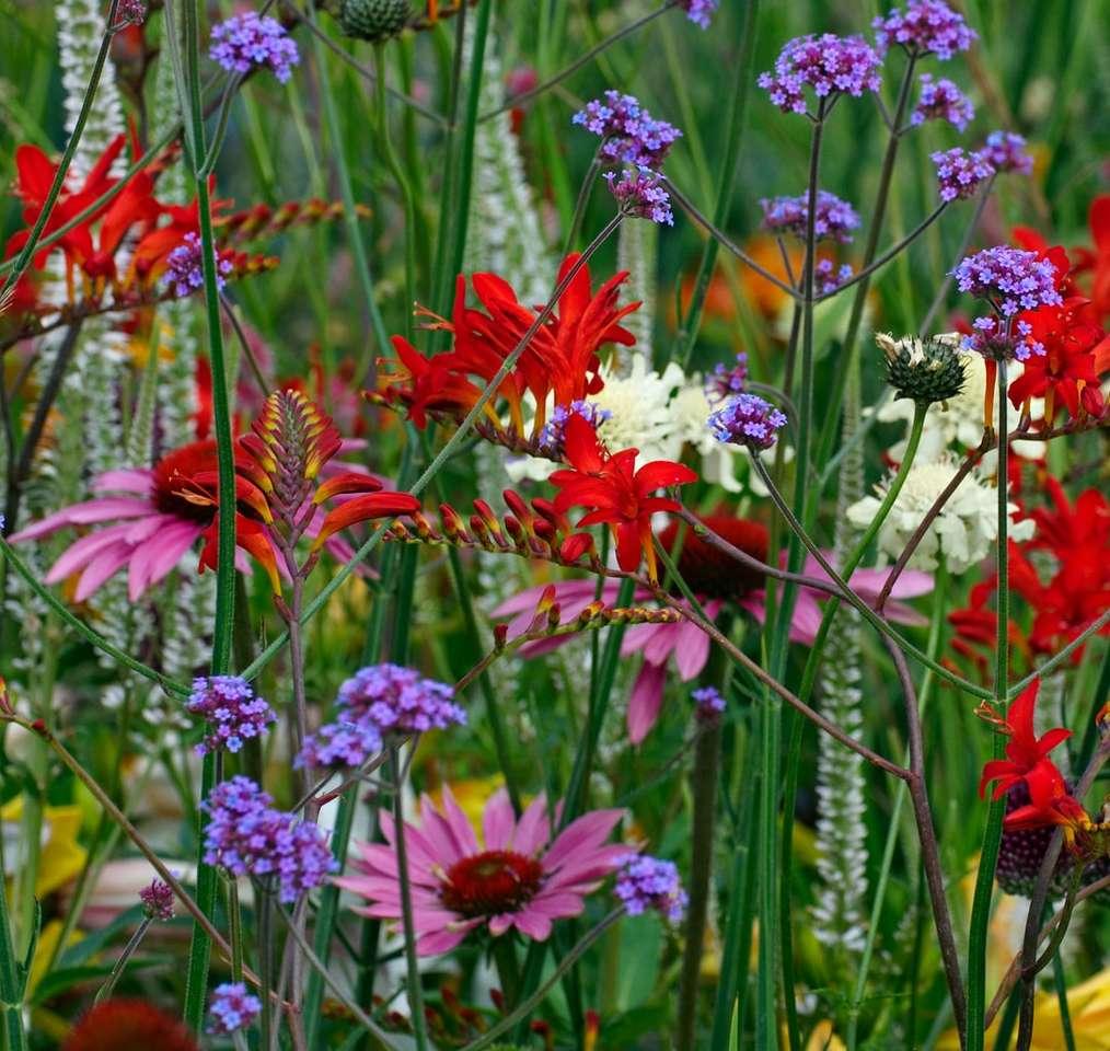 flori roșii și albe în timpul zilei