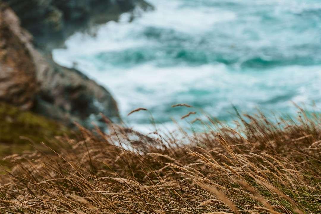 Erba marrone vicino al corpo dell'acqua durante il giorno