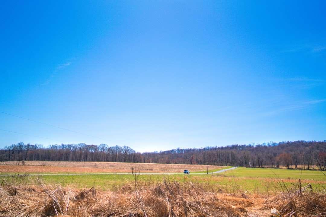 Champ d'herbe verte sous le ciel bleu pendant la journée puzzle
