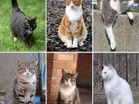 zes katten