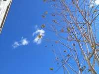 Cer în sestri ponente astăzi