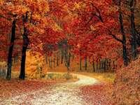 Φθινόπωρο τοπίο