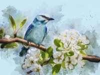 Blauwe vogel • wilde vogels