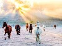 A lovak állománya napkeltekor