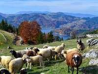 Национален парк Тара в Сърбия