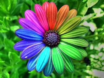 Blumenfarben