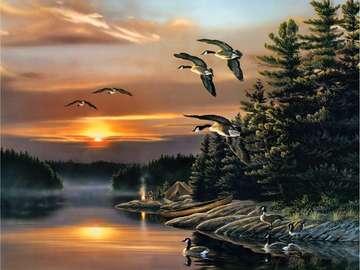 Kanadský les s řekou