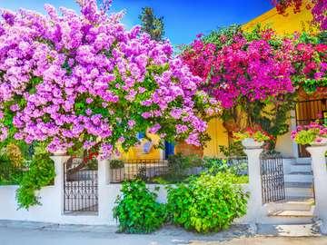 Blommiga träd