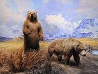 αρκουδάκια στα βουνά
