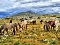 Caii sălbatici din Bosnia-Herțegovina