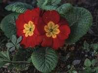 Czerwony kwiat z zielonymi liśćmi