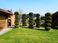 Garten Pflanzen