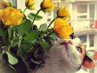 Een katten ruikende tulpen