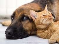 Like a dog with a cat