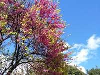 Δέντρο δέντρου