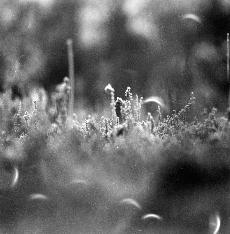Grayscale foto van grasveld online puzzel