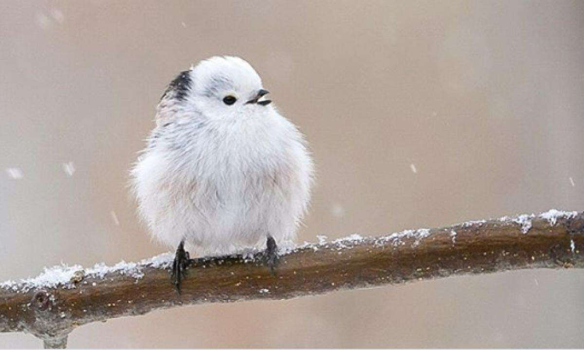pequeña ave rompecabezas en línea