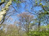 зелени дървета под синьо небе през деня