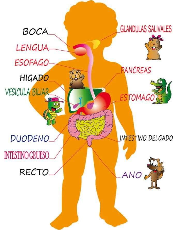 DIGESTIVE SYSTEM online puzzle