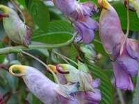 Asiatische Blumen - Papageien