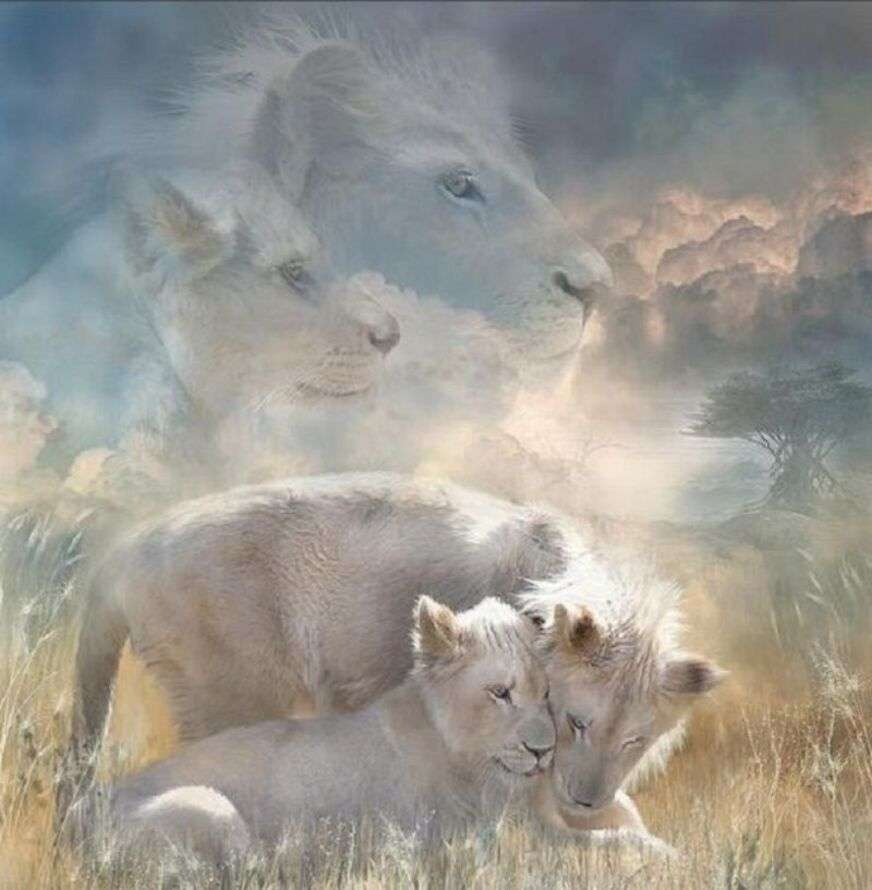 Czułość w rodzinie lwa