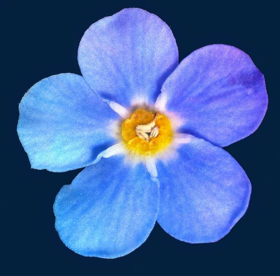 Niebieski kwiat z czarnym tłem