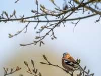 oiseau brun et noir sur une branche d'arbre brun pendant la journée