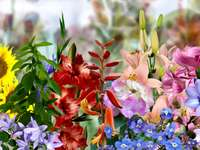 Różnorodne kolorowe kwiaty