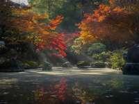 Arbres rouges et verts à côté de la rivière pendant la journée