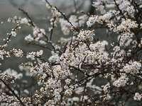 Weiße Blumen in der Tilt-Umschaltlinse