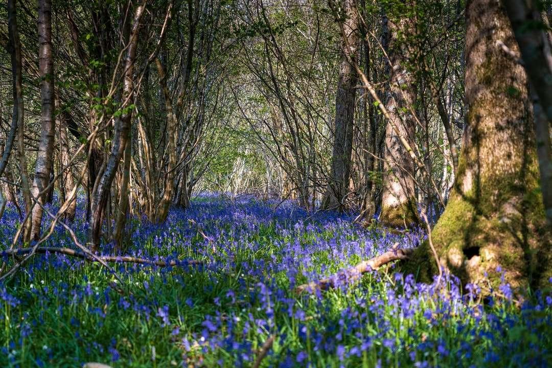 Campo de flor azul con tronco de árbol marrón