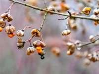 Brun och vit runda frukter
