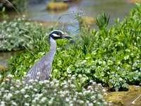 oiseau gris et blanc sur une plante verte