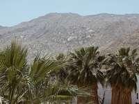 Grüne Palme in der Nähe von Berg da Tageszeit