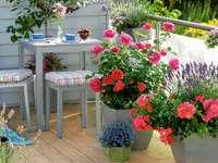 Flori pe balcon