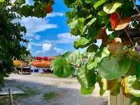 Πράσινο δέντρο φύλλων κοντά καφέ ξύλινο φράχτη κατά τη διάρκεια της ημέρας