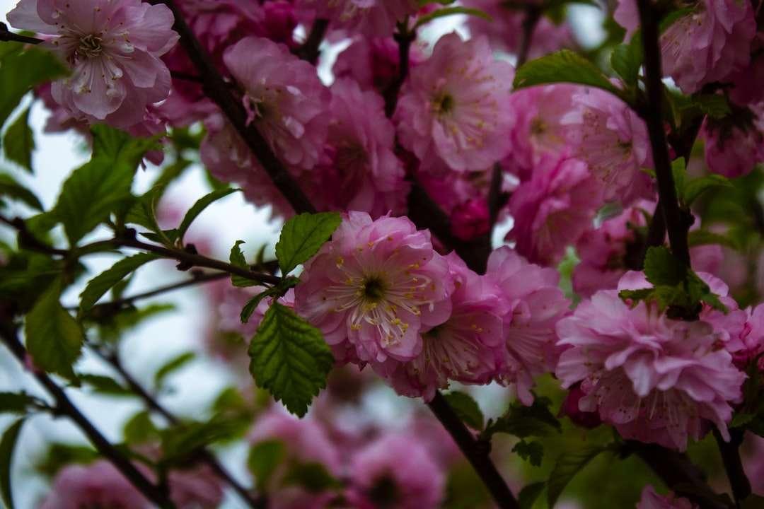 Ροζ λουλούδια σε φακό μετατόπισης κλίσης