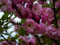Růžové květy v tilt Shift Lens