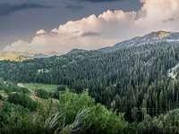 Árvores verdes na montanha sob o céu nebuloso durante o dia