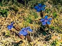 Niebieskie kwiaty na brązowej ziemi