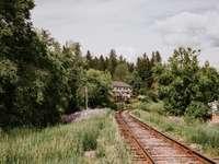 Καφέ σιδηροδρομική γραμμή κοντά σε πράσινα δέντρα κατά τη διάρκεια της ημέρας