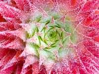 Rote und grüne Blütenblätter