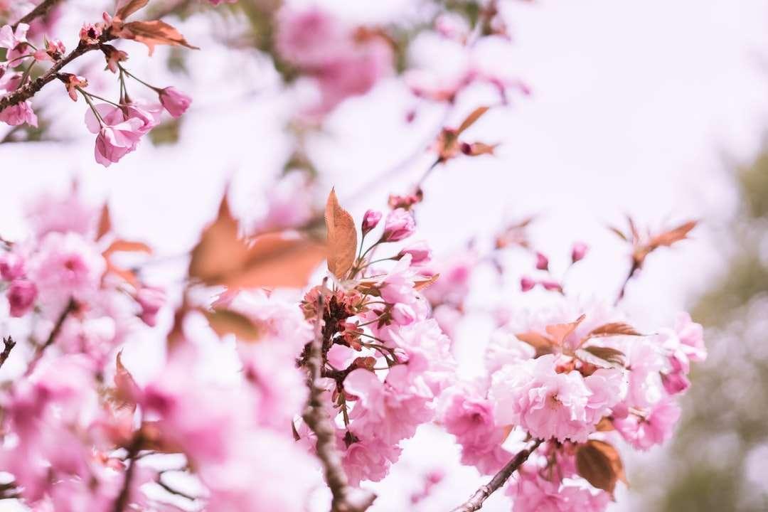 Růžové květy v tilt Shift Lens puzzle