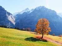 PICTURESQUE AUTUMN LANDSCAPE WITH ORANGE TREE