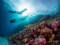 Двама водолази плуват под водата